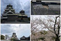 熊本城に桜を見に行きました